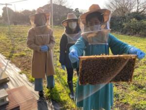 初めて見せてもらった養蜂箱 神奈川県三浦市、飯倉さんの蜂さんたち
