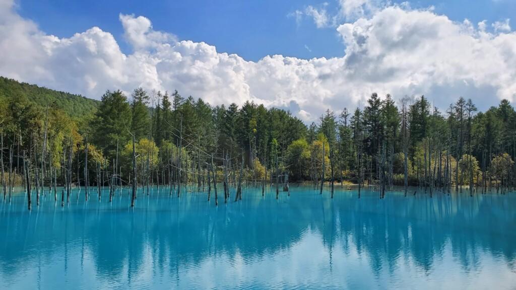 美瑛ブルー 青い池